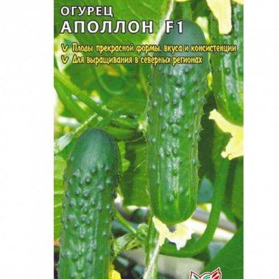 Семена Алтая. Отличная всхожесть, Огромный выбор сортов — Огурец, патиссон, перец — Семена овощей