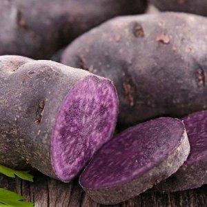 Сорт картофеля Фиолетовый**