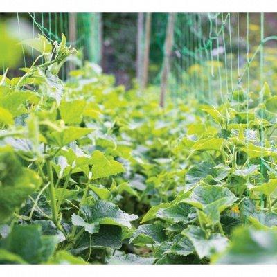 Сетки шпалерные, опоры для  растений.  — Сетки. — Сад и огород