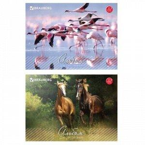 """Альбом для рисования, А4, 32 листа, скоба, обложка картон, BRAUBERG, 200х283 мм, """"Живая природа"""" (2 вида), 103683"""