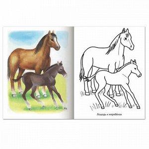 """Книжка-раскраска А5, 8 л., HATBER, Первые уроки, """"Домашние животные"""", 8Рц5 03060, R002101"""