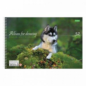 """Альбом для рисования А4, 32 листа, спираль, обложка картон, HATBER ECO, 205х300 мм, """"Собаки"""" (5 видов), 32А4Cсп"""