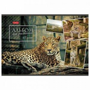 Альбом для рисования А4 48 л., скоба, обложка картон, HATBER, 205х290 мм, Ассорти, 48А4В