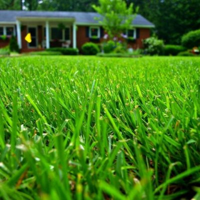✔Осенний предзаказ: Луковичные и Саженцы — Газонная трава