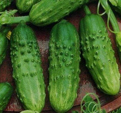 2000 видов семян для посадки! Подкормки, удобрения.     — Семена Огурцов. ХИТЫ от 9р! — Семена овощей