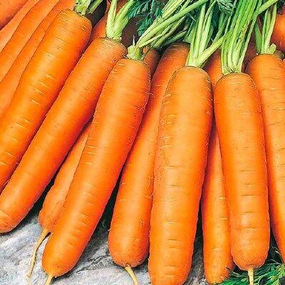 Дачный сезон! НЕ ПРОПУСТИ! Более 2000 видов семян!   — Семена Моркови от 10р — Семена овощей