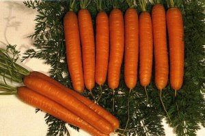 Морковь Королева осени ЧБ