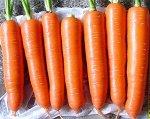 Морковь Неженка (А) ЦП