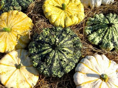2000 видов семян для посадки! Подкормки, удобрения. — Семена Патиссонов. От 7 р! — Семена овощей
