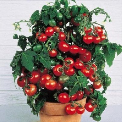 видов семян для посадки! Подкормки, удобрения — Семена для дома и балкона. Топ продаж от 8р