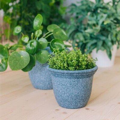 🌷 Кашпо, горшки, грунт - всё для домашних цветов и сада — От 2 до 3 л — пластик