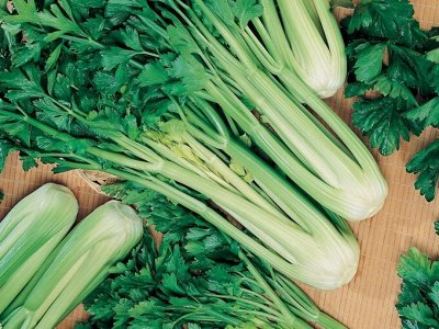 Дачный сезон! НЕ ПРОПУСТИ! Более 2000 видов семян!   — Вкусная, полезная зелень. ХИТЫ от 4,7р! — Семена зелени и пряных трав