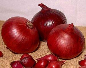 Лук репч. Красный салатный, на зелень 0,5 г ХИТ х3