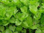 Сельдерей листовой Захар 0,3 г ХИТ х3