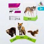 Обучающие карточки «Изучаем английский. Дикие животные», 16 штук, 3+