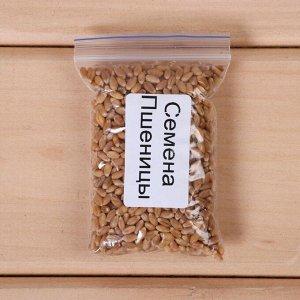 Набор для выращивания микрозелени Vegebox, 5 лотков, пшеница