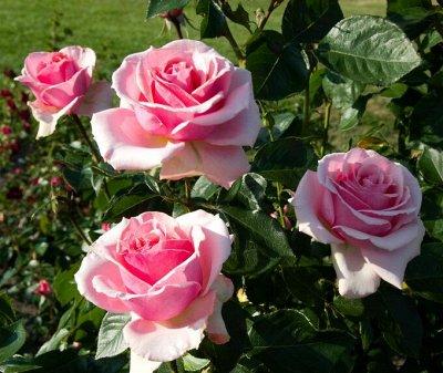 НОвинка! Плантафол 10-54-10 Взрыв цветения — Плантафол, заводская упаковка