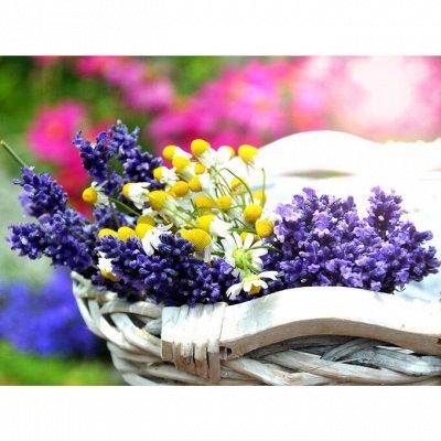 🏡Семена ☘ + Микрозелень + Удобрения — Лечебный огород  — Семена аптечные