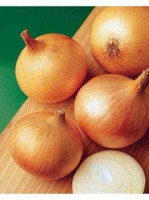 Турбо Сорт репчатого лука Турбо появился в продаже не так давно, но уже стал популярным у дачников. Культура неприхотлива, высокоурожайна, подходит для выращивания во многих регионах страны. Полуостры