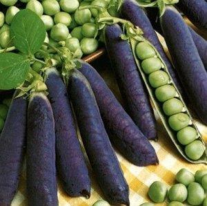 """Семена Горох """"Все фиолетово"""""""