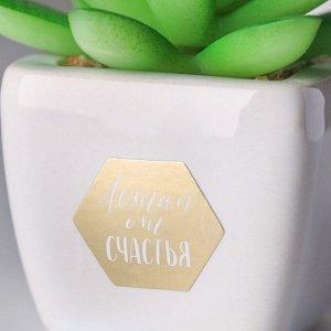 Суккулент в керамическом горшочке «Летай от счастья». 7.5 ? 5.5 ? 6 см