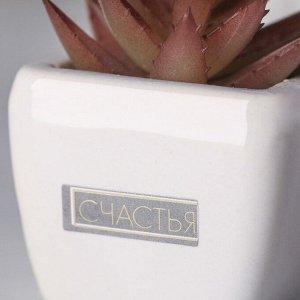 Суккулент в керамическом горшочке «Счастья». 7.5 ? 5.5 ? 6 см