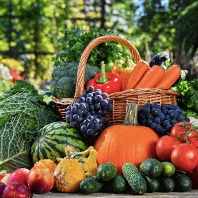Богатый урожай! Семена, грунт, горшочки для рассады, кашпо