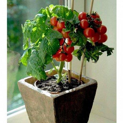МикроЗелень 🍅+🌸 Семена  и☘ Газон  — Урожай дома на окне — Семена овощей