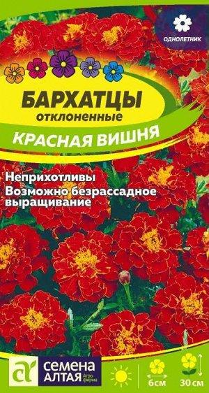 Бархатцы Красная Вишня/Сем Алт/цп 0,2 гр.