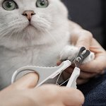 Ножницы для стрижки когтей у животных