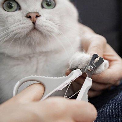 Xiaomi - Зеркала для макияжа — 🐈 Для питомцев — Для животных