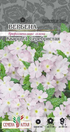 Цветы Вербена Кварц Серебристая/Сем Алт/цп 5 шт