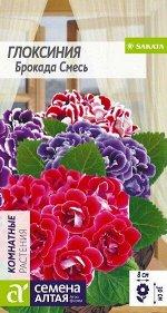 Цветы Глоксиния Брокада Смесь F1/Сем Алт/цп 8 шт.
