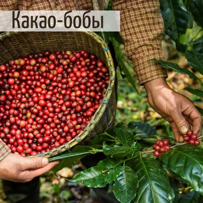 Kafema. Кофе в зернах, молотый и натуральный без кофеина ☕ — Каскара, какао-бобы, кофейные цветы