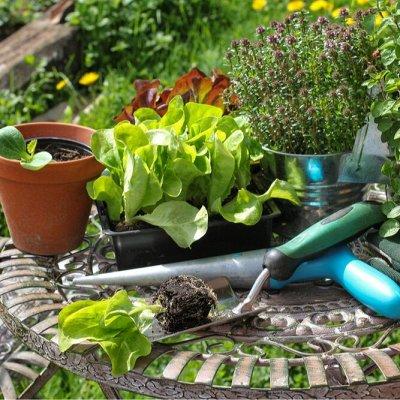 Все для сада и огорода (много новинок) — Садовый инвентарь