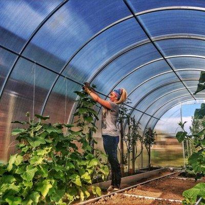 Все для сада и огорода (много новинок)  — Теплицы и парники и все для них — Парники и теплицы