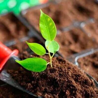 Цветочный дворик: фиалки, стрептокарпусы, бегонии и другие — Грунт и компоненты  — Удобрения и грунт