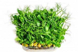Семена на Микрозелень Горох овощной ЦП