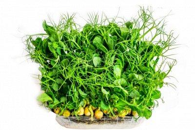 видов семян для посадки! Подкормки, удобрения — Семена микрозелени. Топ продаж от 21 р