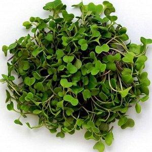 Семена на Микрозелень Капуста брокколи ЦП