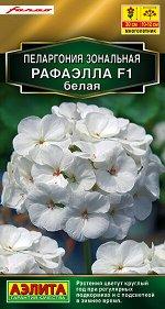 Пеларгония Рафаэлла F1 белая