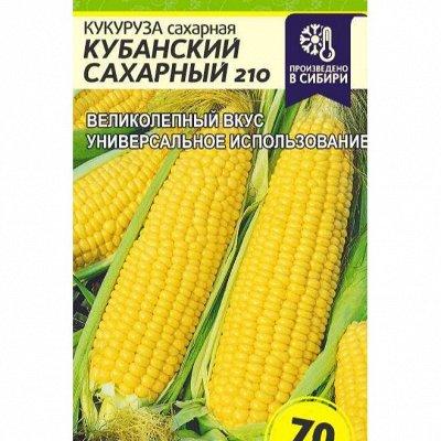 Семена Алтая. Отличная всхожесть, Огромный выбор сортов — Кабачок, капуста. Кукуруза — Семена овощей