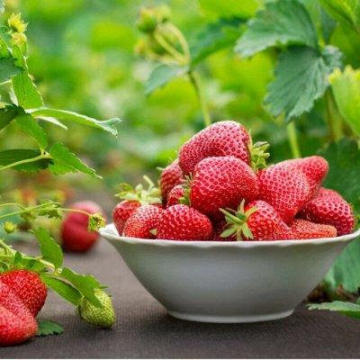 Садовые и лесные саженцы — Клубника — Плодово-ягодные