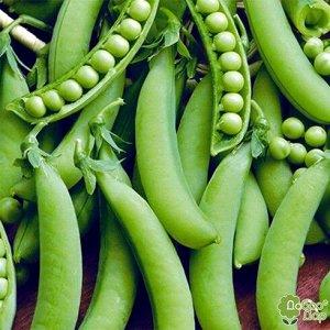 Горох овощной Адагумский