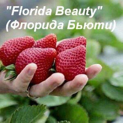 ТВОЙ ШИКАРНЫЙ УРОЖАЙ КЛУБНИКИ! — КЛУБНИКА шикарные кусты РЕМОНТАНТНЫЕ — Плодово-ягодные