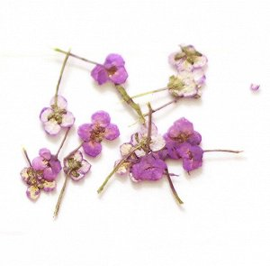 Сухоцветы для дизайна 08