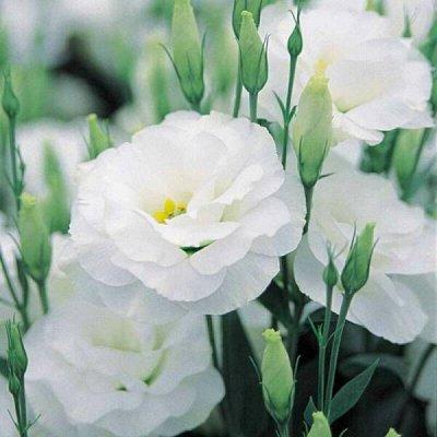 2000 видов семян для посадки! Подкормки, удобрения. — Семена комнатных растений — Семена многолетние