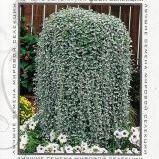 Садовая Империя! Все самое лучшее для Вашего участка! (10.02) — Семена цветы