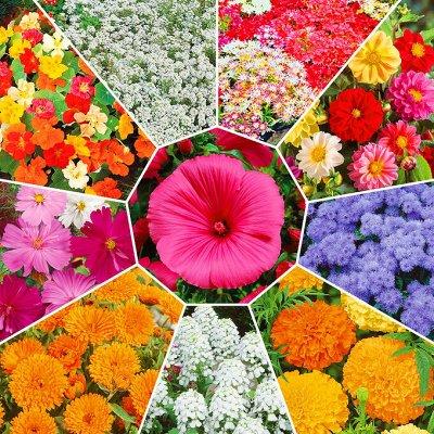 Мудрый дачник🌱 Акция! Лук севок от 69 рублей! Голландия  — Семена цветов — Семена однолетние