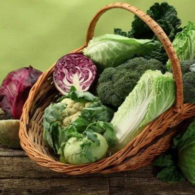 Экспресс! Мудрый дачник! Лук - Севок в наличии!✔ — Капуста — Семена овощей